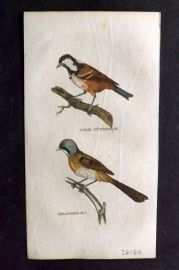 Brightly (Pub) 1815 Hand Col Bird Print. Cole Titmouse. Bearded Titmouse